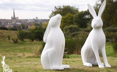 GoGoHares in Norwich